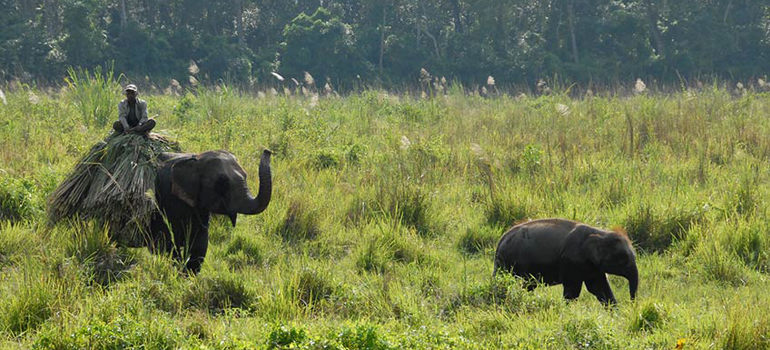 chitwan-safari